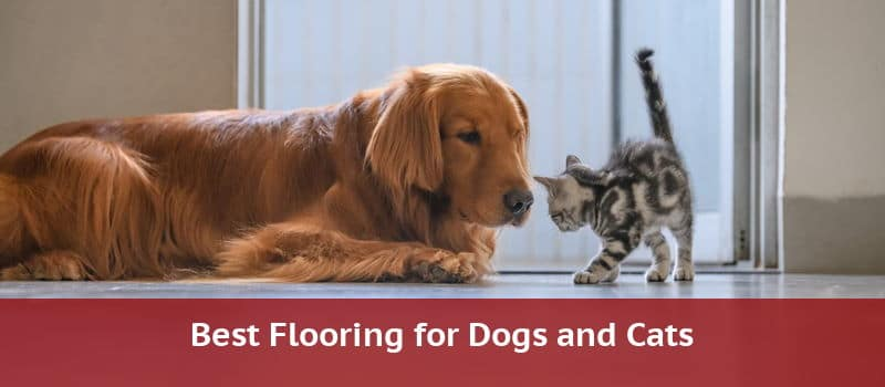 Best Flooring For Dogs And Other Pets